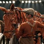 War Horse - Edinburgh