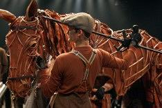 War Horse - Plymouth