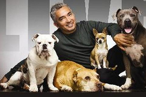 The Dog Whisperer Tickets