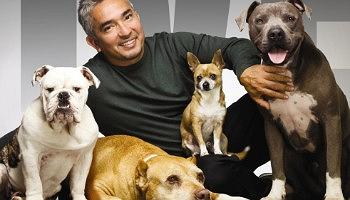 Cesar Millan Tickets