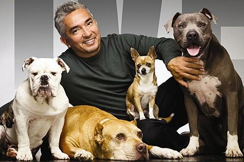 Cesar Millan-billetter